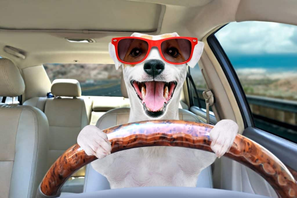 Find out the best pet transport services for your baby to arrive safe and sound.