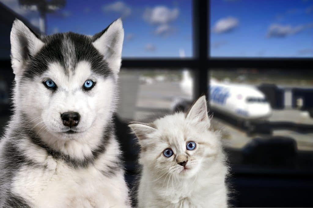 Find the best in pet friendly airlines, here in this short article: https://blog.beapp.co/2019/11/the-best-pet-friendly-airlines/ #BeFriendly #BeTraveling #pet #cat #dog #BeDiscovering #BeDiscoverable #BeApp
